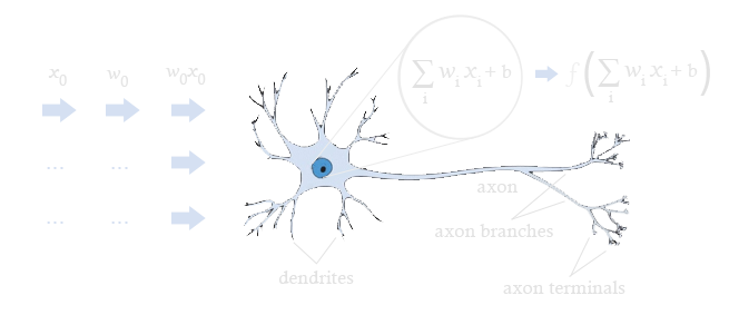 A biological neuron annotated with aspects from artificial neural networks, describing ANNs process information.